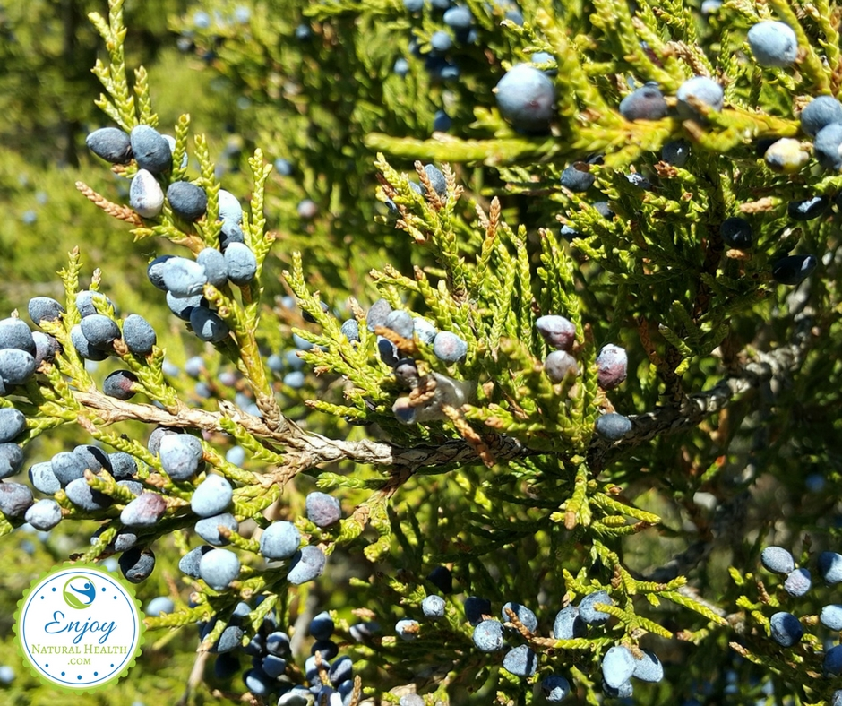 Cedarwood essential oil uses and benefits