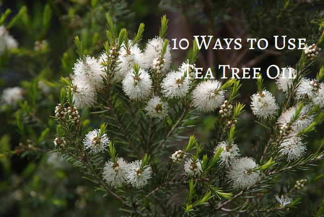 ways to use tea tree oil