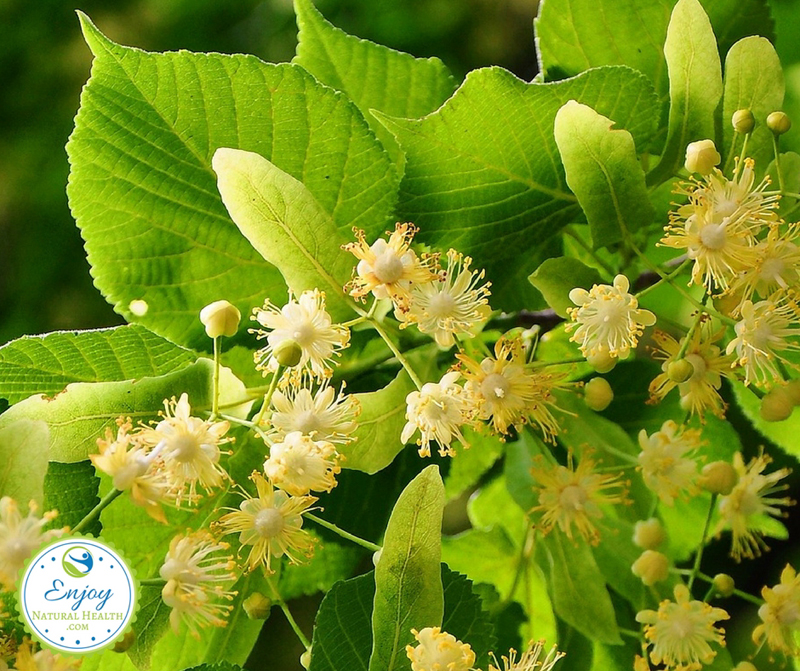 Drink team made from linden flowers to help you sleep better