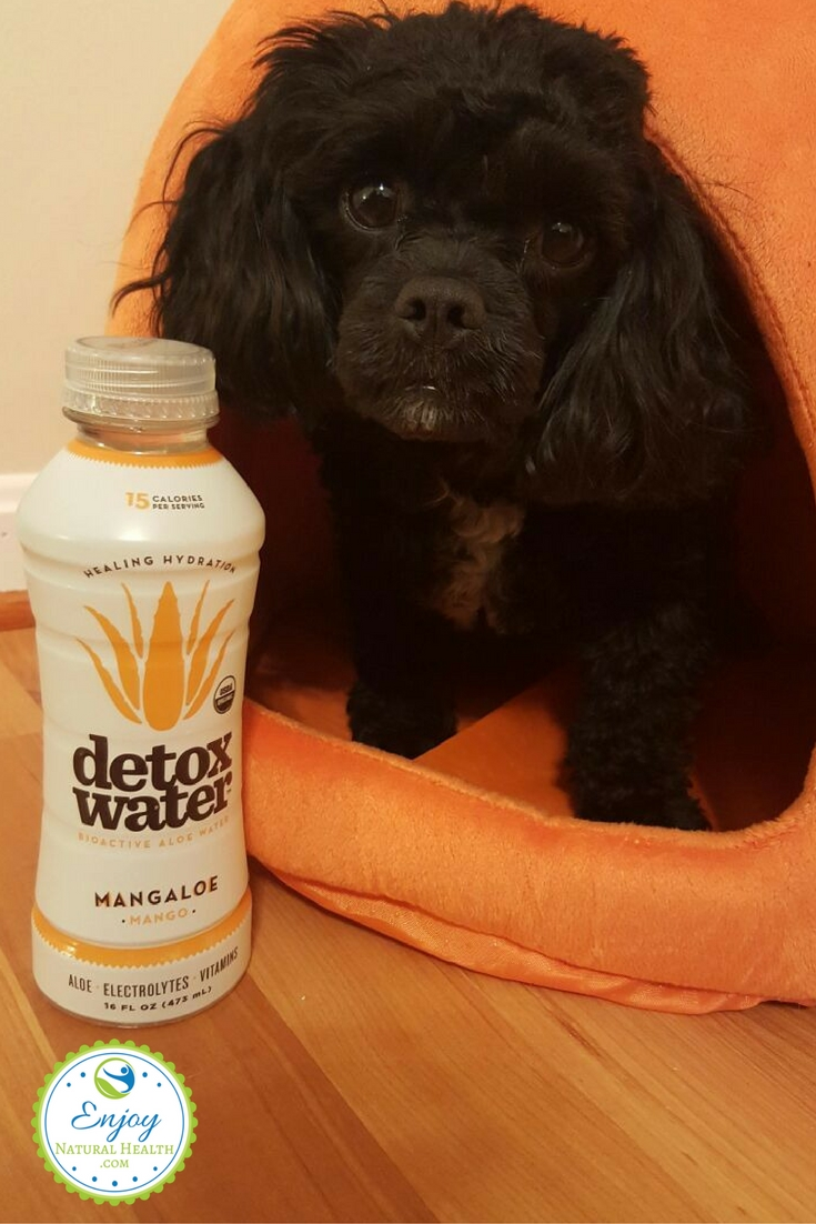 Our adorable puppy waiting to get a drink of aloe detox water