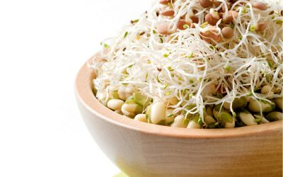 Healthy and delicious mung bean and lentil sprouts salad